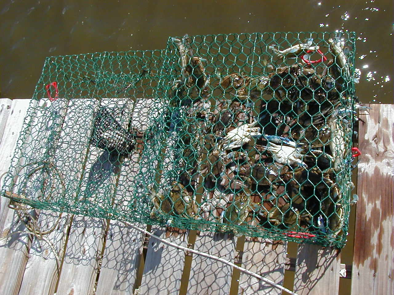 Crab Trap Closure for Florida Panhandle